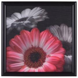 Cuadro Decorativo Flor Roja 1 - Envío Gratuito